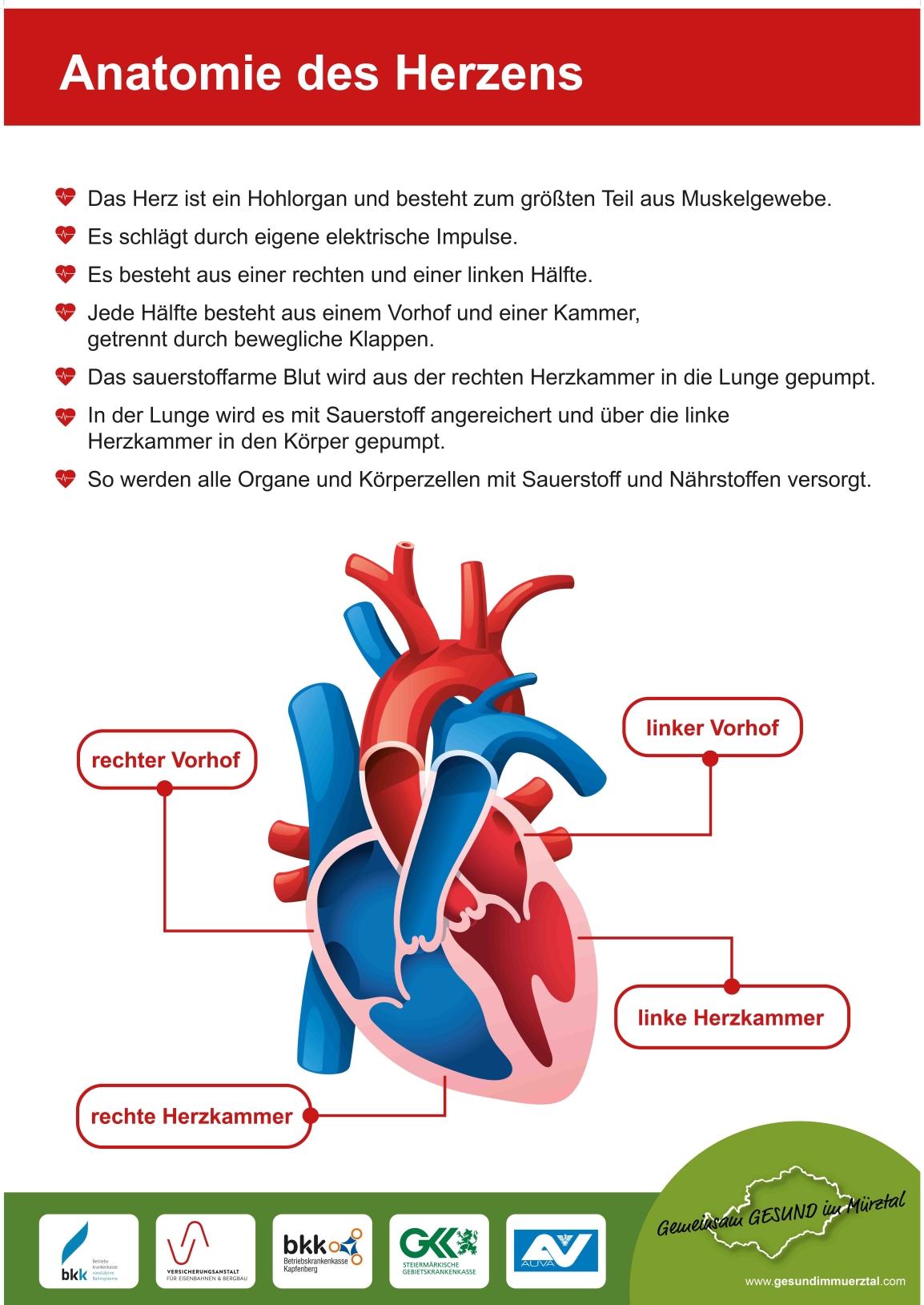 Anatomie des Herzens – Genusstag Kapfenberg – Gemeinsam GESUND im Mürztal